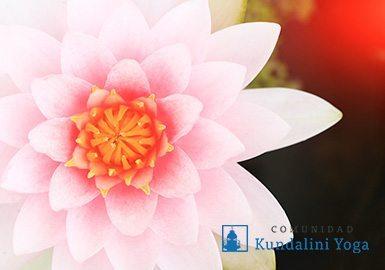 flor-de-loto