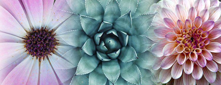 Tres flores representando la posibilidad de unión de ideas que la mujer puede entregar.