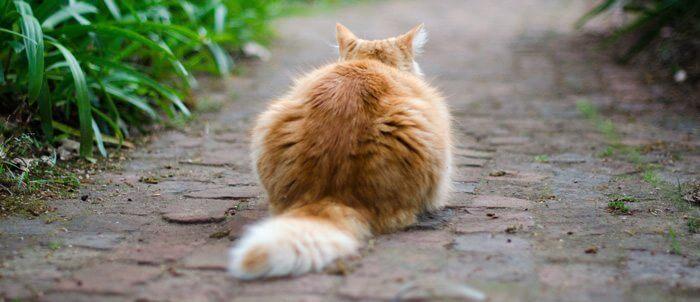 gato-paciente